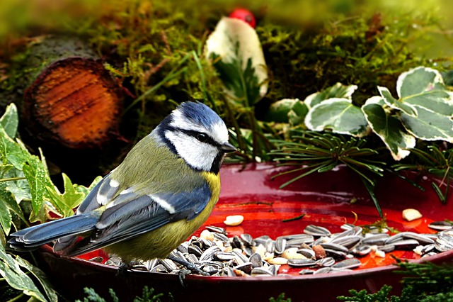 ptáček a semínka