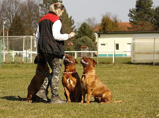 cvičení se psy