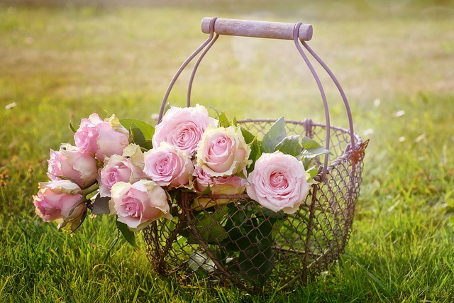 košík růží